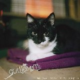 Guillemots:I Saw Such Things in My Sleep EP